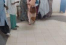 Photo of إقبال متوسط علي مكان التلقيح في مستشفي روصو